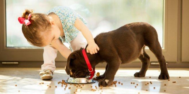 Haustiere und Babys: Kleinkind füttert Hund