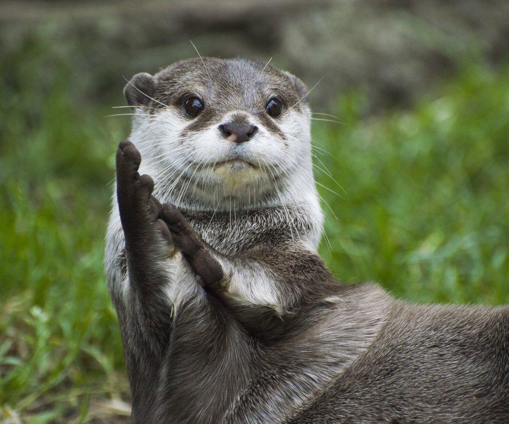 Otter-Tattoos