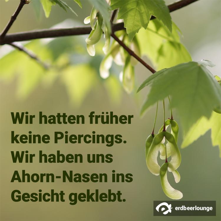 Ahorn-Nasen