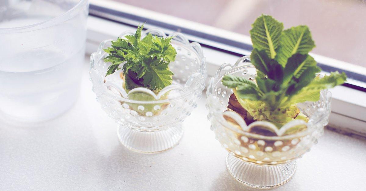 Regrowing-So-einfach-kannst-du-Gem-se-im-Wasserglas-vermehren