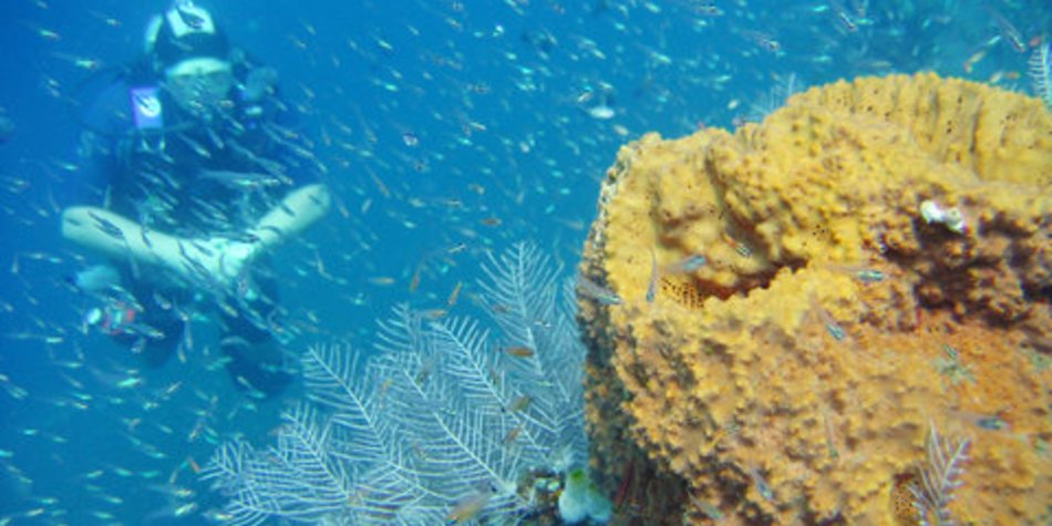 Wo kann ich Meeresbiologie studieren?