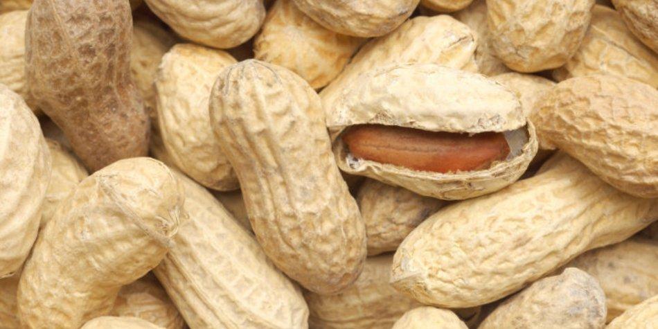 Erdnüsse in der Schwangerschaft sind unbedenklich