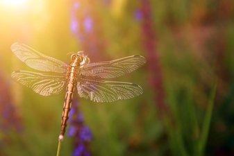 Libelle-Tätowierung
