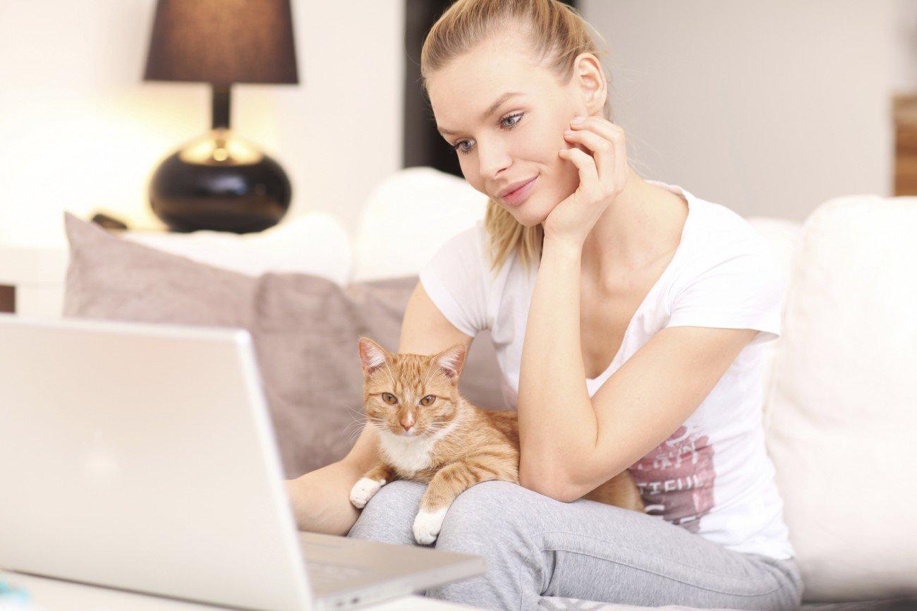Katzenvideos schauen