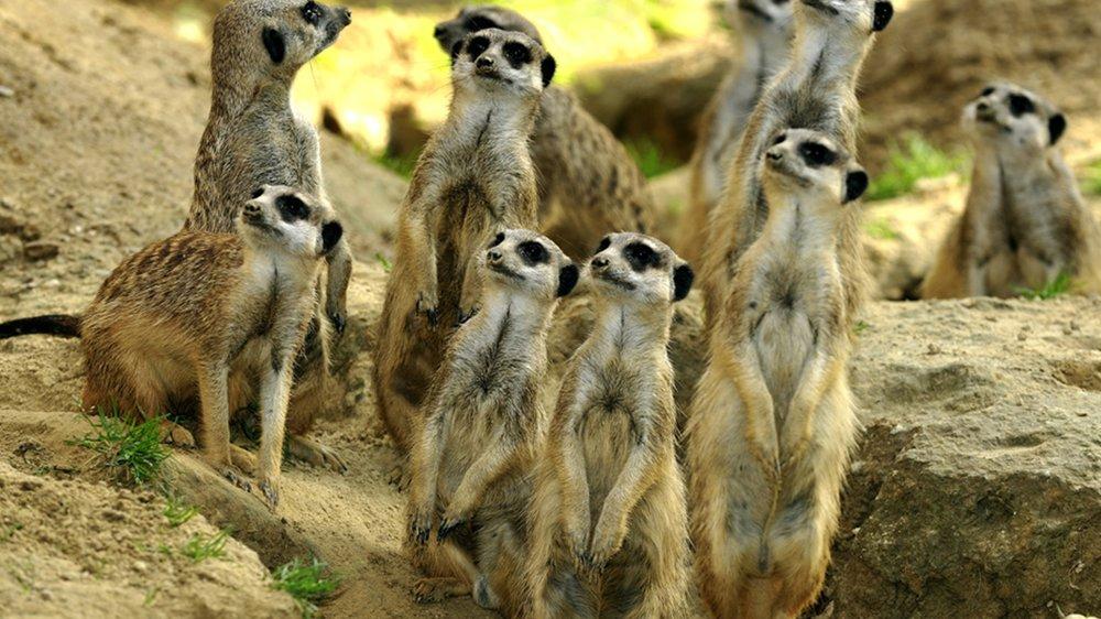 Kölner Zoo Erbe aus den USA