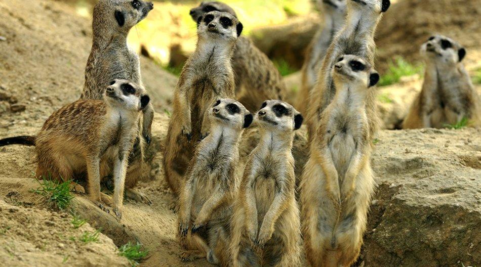 Amerikanerin will Kölner Zoo 22 Millionen Dollar vererben