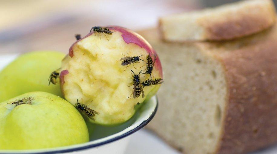 Wespen bekämpfen
