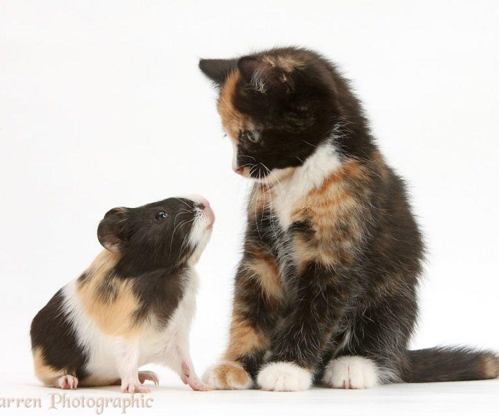 cute-matching-pets-warren-photographic-31-57e935338ed16__880