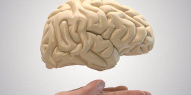 Gehirn Entwicklung zeigt genaues Alter an