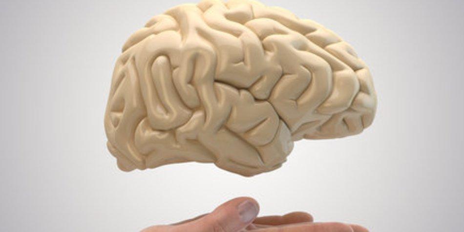 Gehirn: Entwicklung nach Zeitplan