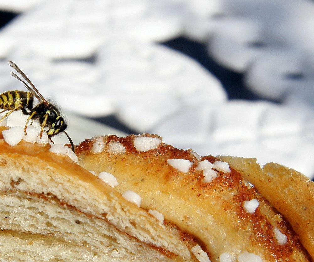 Wespen töten ist teuer