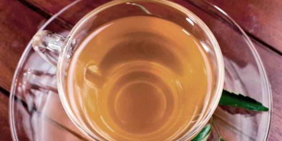Weißer Tee Abnehmen