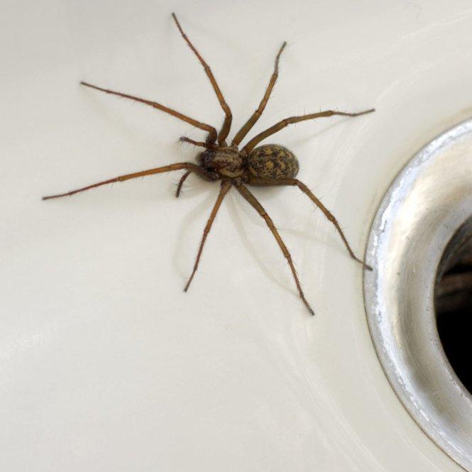 Spinnen vertreiben