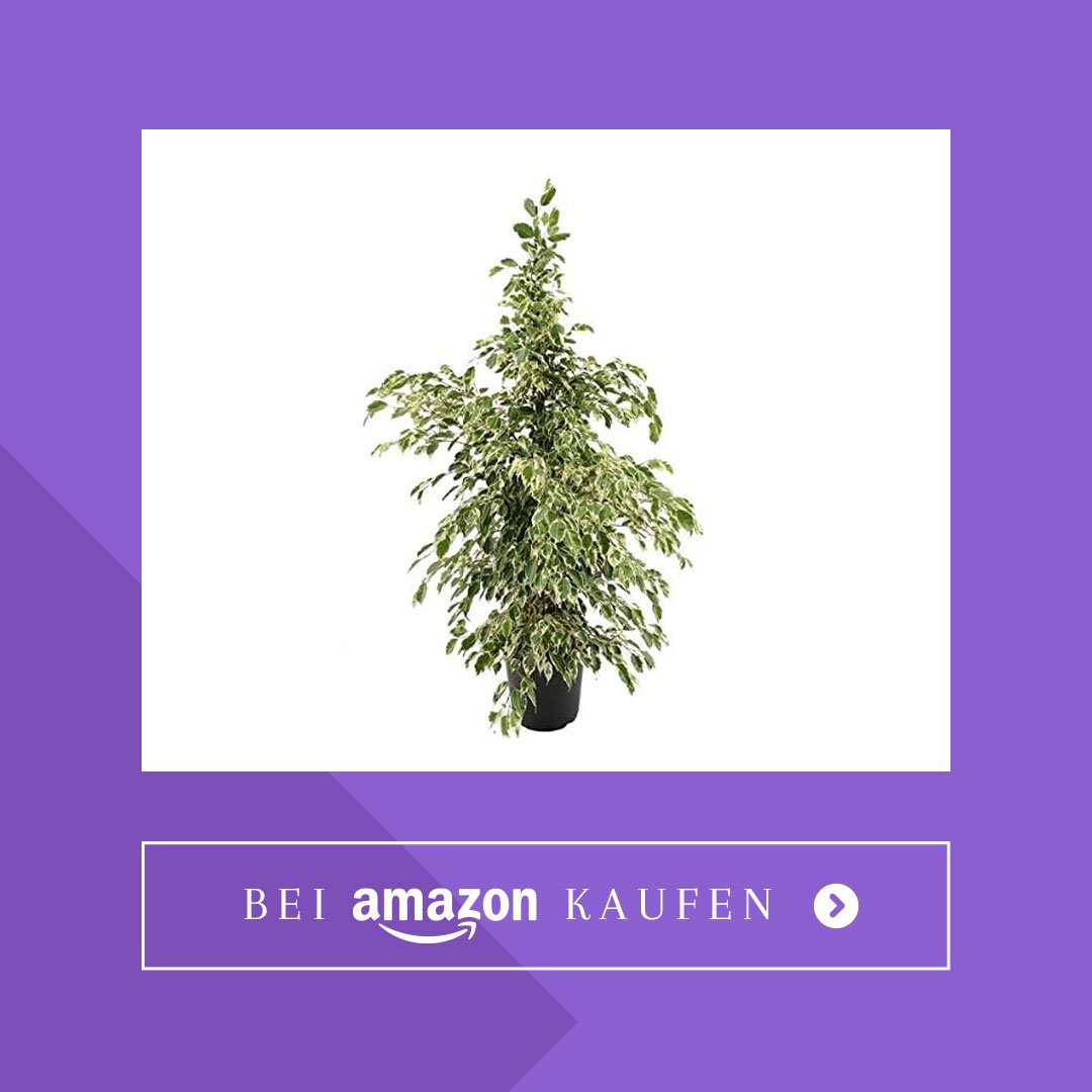 Wohnung abkühlen Pflanze
