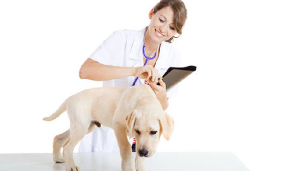 Tierheilpraktiker : Was steckt hinter dem Beruf Tierheilpraktiker?