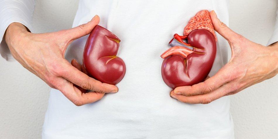 Organspender Niederlande
