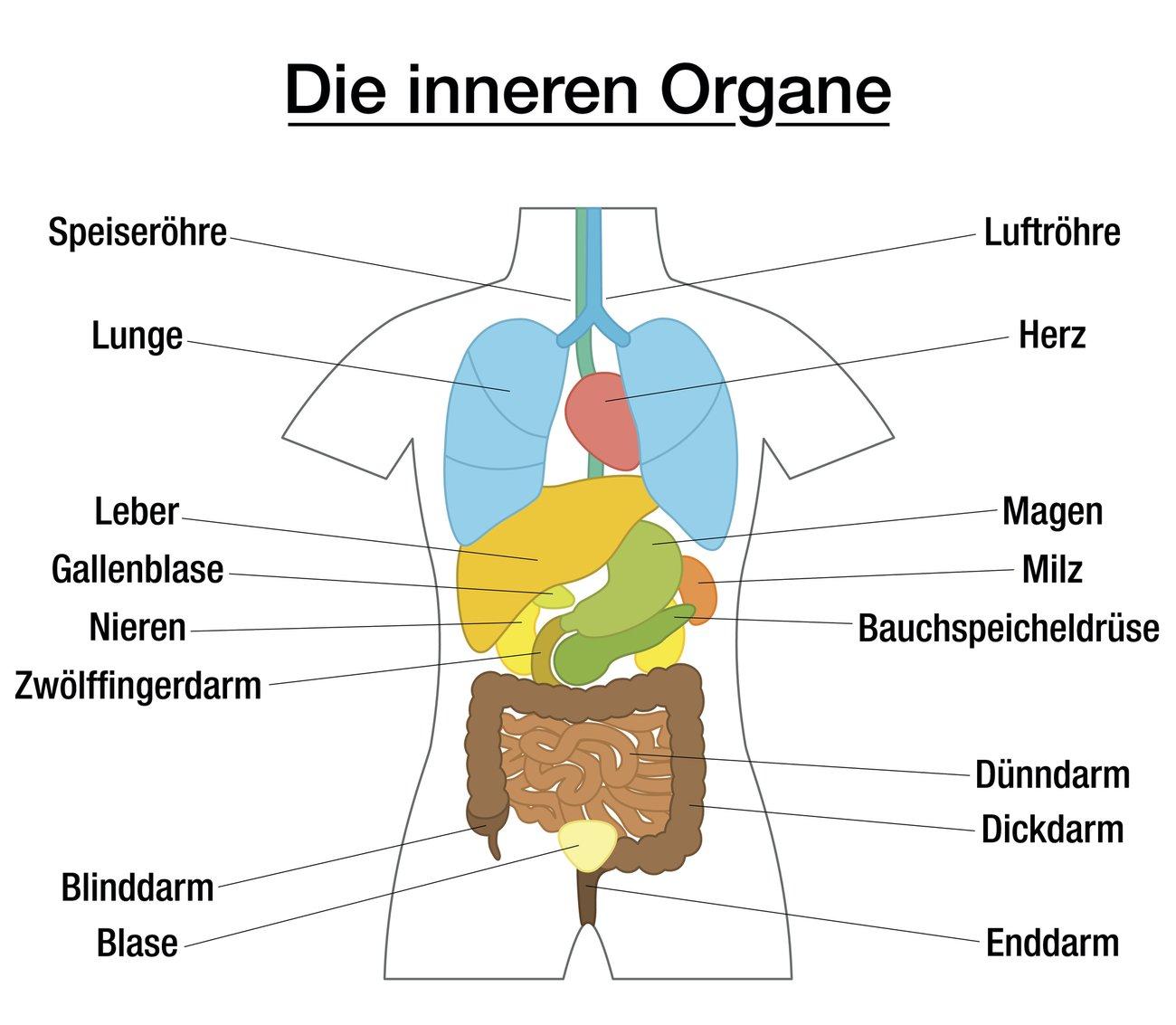Die Lage deiner Organe spielt eine große Rolle