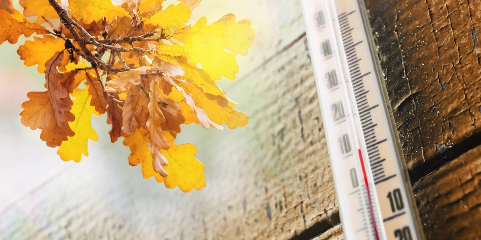Thermometer on the old wooden wall, and autumn leaves, the concept of cool autumn weather